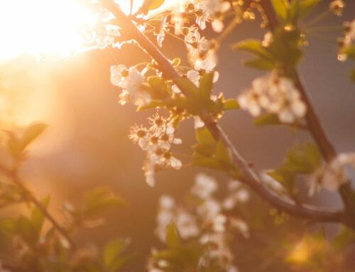 Frühjahrsputz für die Haut: Microdermabrasion alias Powerpeel