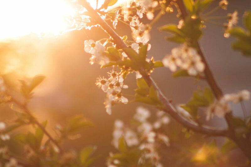 Microdermabrasion Frühjahrsputz